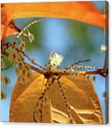 Fall Jewels Canvas Print