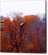 Fall Landing Canvas Print