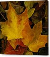 Fall Leaf Litter Canvas Print