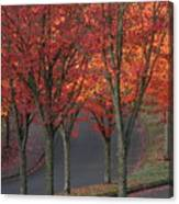 Fall Leaves Along A Curved Road Canvas Print
