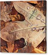 Fall Leaves And Dew 8 2017 Canvas Print