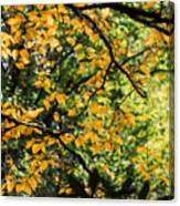 Fall Leaves In The Smokies Canvas Print