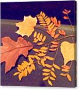 Fall Leaves On Granite Counter Canvas Print