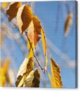 Fall Leaves Study 3 Canvas Print