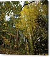Fall Maple In Yosemite Canvas Print