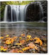 Fall Maple Leaves At Hidden Falls Canvas Print