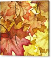 Fall Maple Leaves Canvas Print