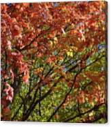Fall Maples Green Gold Canvas Print