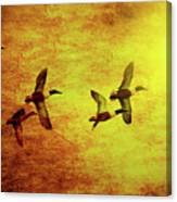 Fall Migration . Northern Shovelers . Texture . 40d5393 Canvas Print