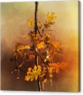 Fall Oak Leaves Canvas Print