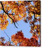 Fall Oak Leaves Up Above Canvas Print