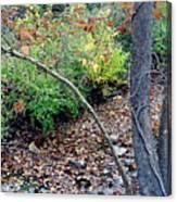 Fall On The Bike Trail Canvas Print
