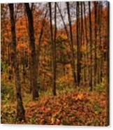 Fall On The Ice Age Trail Canvas Print