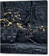 Fall On The Rocks Canvas Print