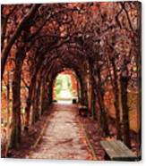 Fall Passage Canvas Print