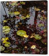 Fall Pond Reflections - A Story Of Waterlilies And Japanese Maple Trees - Take One Canvas Print