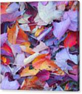 Fall Purples  Canvas Print