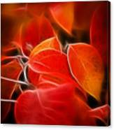 Fall Red 6675 Canvas Print