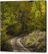 Fall Roads Canvas Print
