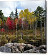 Fall Scene 4 Canvas Print
