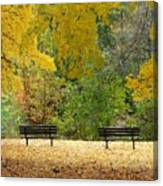 Fall Series 12 Canvas Print