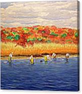 Fall Shellfishing In New England Canvas Print