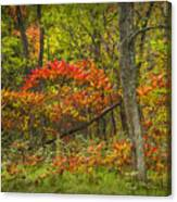 Fall Sumac Trees With Red Leaves In A Michigan Forest During Autumn Canvas Print