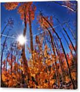 Fall Sun And Trees Canvas Print