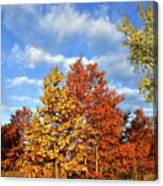 Fall Sunrise On Hackmatack Nwr Oaks Canvas Print