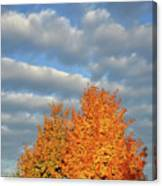 Fall Sunrise On Sugar Maple Along Route 31 Canvas Print