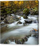 Fall Surge Canvas Print