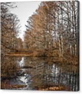 Fall Swamp Canvas Print