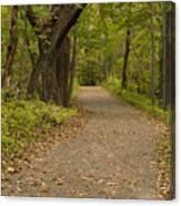 Fall Trail Scene 45 A Canvas Print