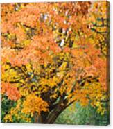 Fall Tree Art Print Autumn Leaves Canvas Print