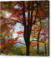 Fall Tree Colors I Canvas Print