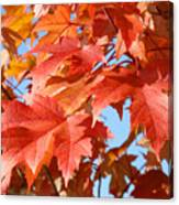 Fall Tree Leaves Art Prints Blue Sky Autumn Baslee Troutman Canvas Print