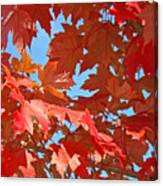 Fall Tree Leaves Red Orange Autumn Leaves Blue Sky Canvas Print