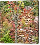 Fall Tree With Intense Colors Canvas Print
