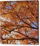 Fall Tree With Star Burst Canvas Print