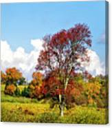 Fall Trees In Country Field Canvas Print