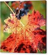 Fall Vine Canvas Print