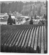 Vineyard In Black And White Canvas Print
