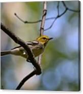 Fall Warbler Canvas Print