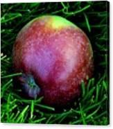 Fallen Apple Canvas Print