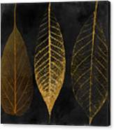 Fallen Gold II Autumn Leaves Canvas Print