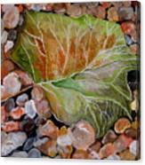 Fallen Leaf Canvas Print