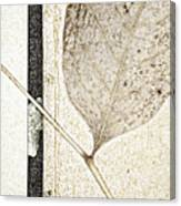 Fallen Leaf Two Of Two Canvas Print