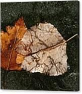Fallen Leaves On Frozen Water Canvas Print