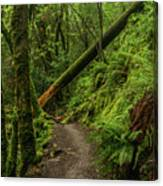 Fallen Tree On The Trail Canvas Print