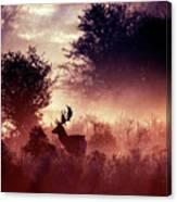 Fallow Deer In Fairytale World Canvas Print